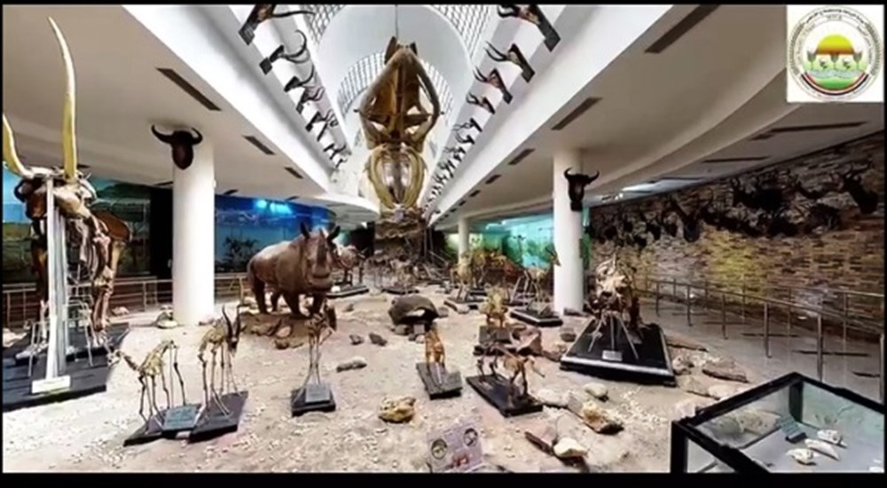 Zoological Museum, at the Giza Zoo.